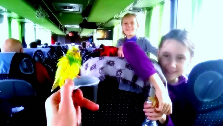 Попугай. Автобус Москва Симферополь Full HD. Xiaomi Mi Max camera 720p